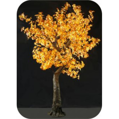Tree Maple 1.8M Yellow